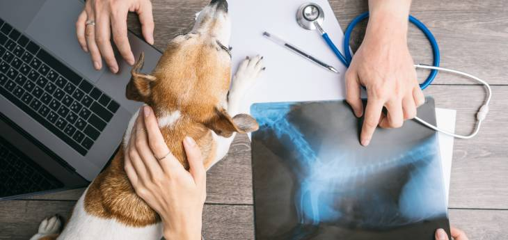 Bandscheibenvorfall Hund Einschläfern