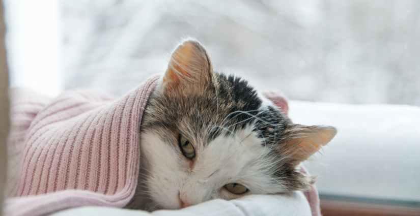 Giardien katze homoopathisch behandeln, Giardien katze homoopathisch behandeln