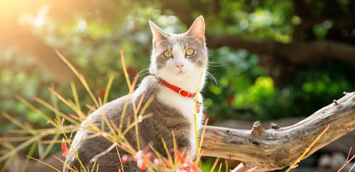 GPS-Halsband für Katzen: Tiermedizin Dr. Gumpert