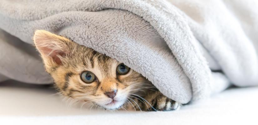 Ihre Katze Hat Einen Schnupfen Das Sind Die Besten Hausmittel