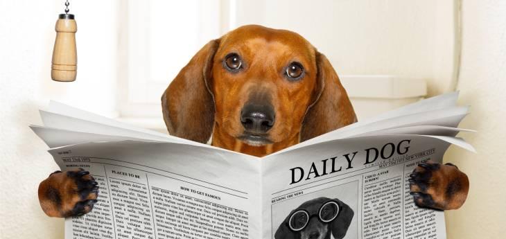 Lipom Beim Hund Tiermedizin Dr Gumpert
