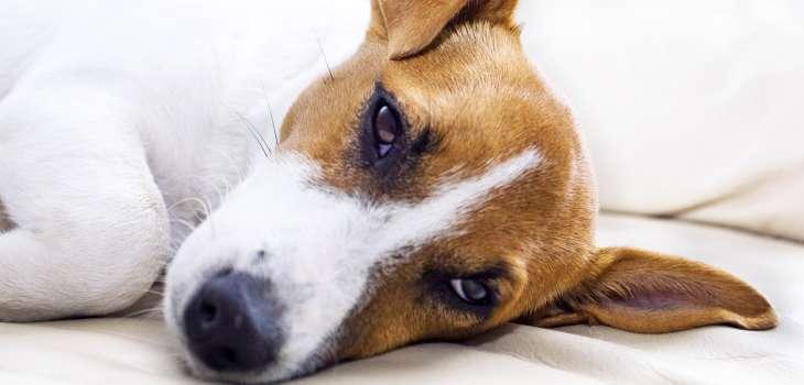 Hund Vergiftung Verlauf