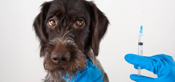 Cushing Syndrom beim Hund - Endstadium: Tiermedizin Dr ...