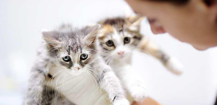 kitten geschlecht erkennen