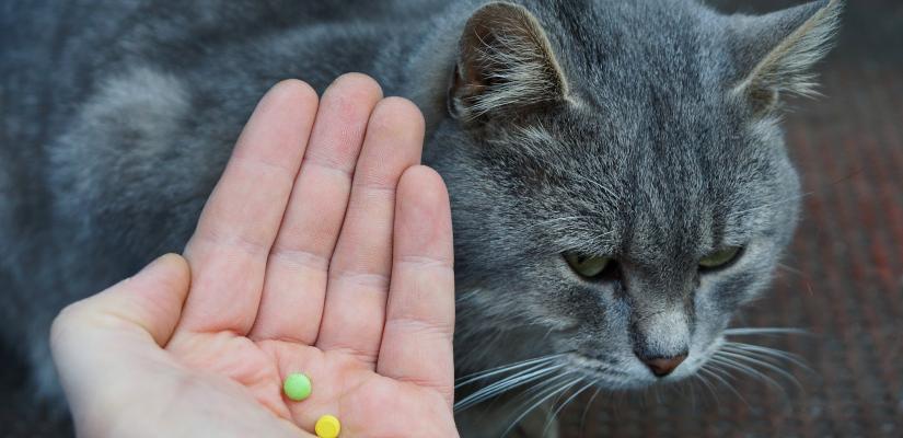 eine heilung für würmer katze fütterung